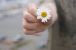 Hand offering a daisy