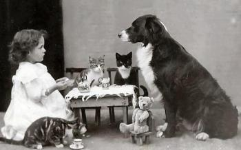 Tea party with pets